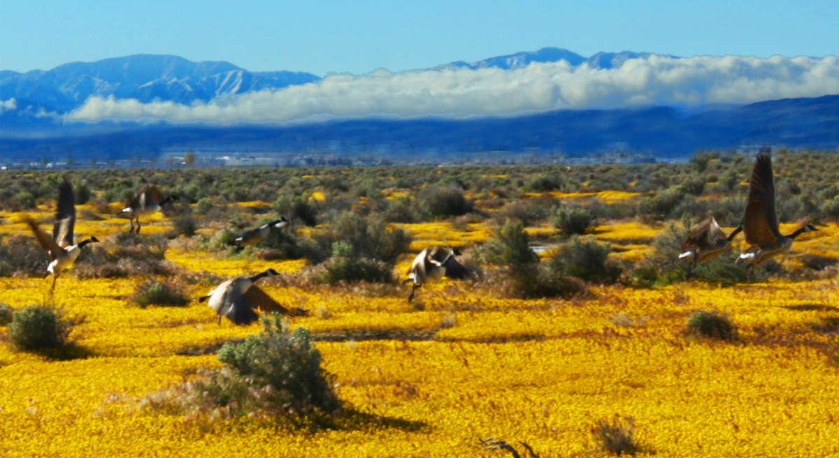 Voici les meilleurs déserts à parcourir aux USA